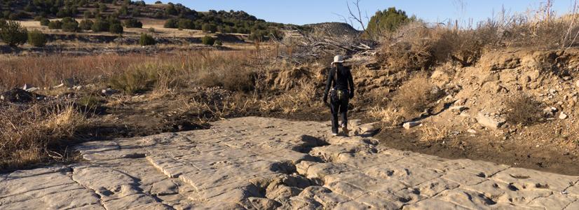 Dinosaur footprints near La Junta, Colorado